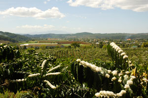 Coffee plantations in the highlands of central Vietnam