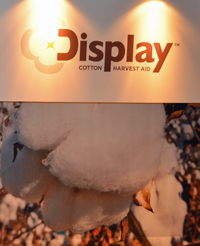 bwcc13-display