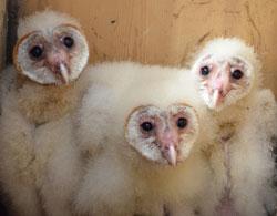 ctic-14-owls