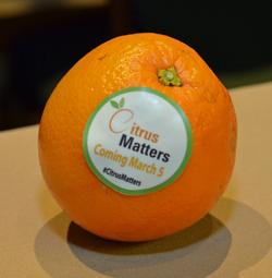bayer-aif15-orange