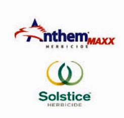 anthemmaxx-solstice