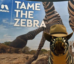 nufarm-zebra-hat