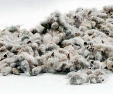 cottonseed-cottoninc