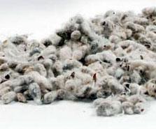 cottonseed-cottoninc
