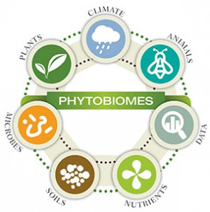 phytobiomesIdentity_circle_small