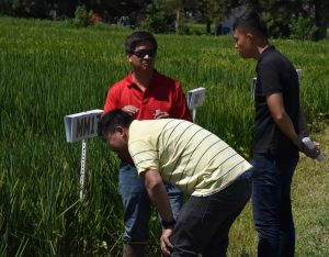 Taiwanese Rice Importers Visit Missouri | AgWired